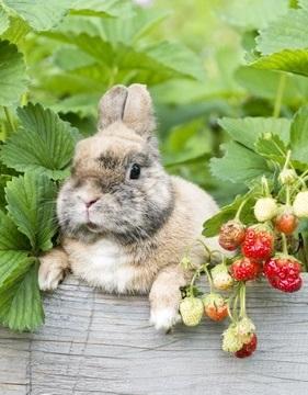 Kaninchen im Erdbeerbeet